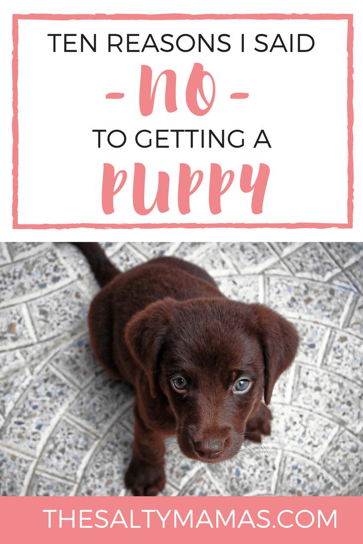 thirteen reasons why epub bud