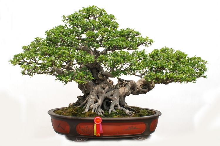 the complete book of bonsai ebook