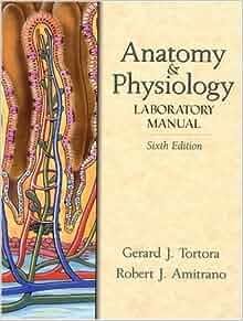 human anatomy and physiology by tortora ebook